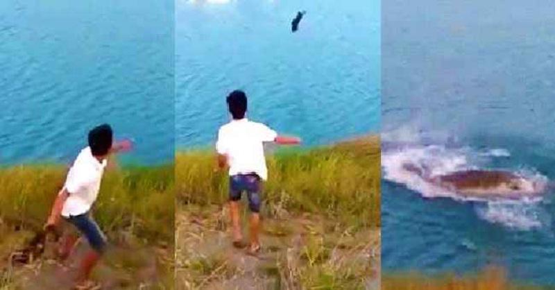 Choquant : Il jette un chiot dans le lac pour nourrir le crocodile !