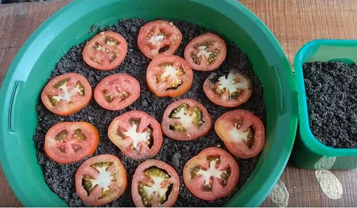 Découvrez les moyens les plus simples de cultiver des tomates pour ne plus jamais en acheter !