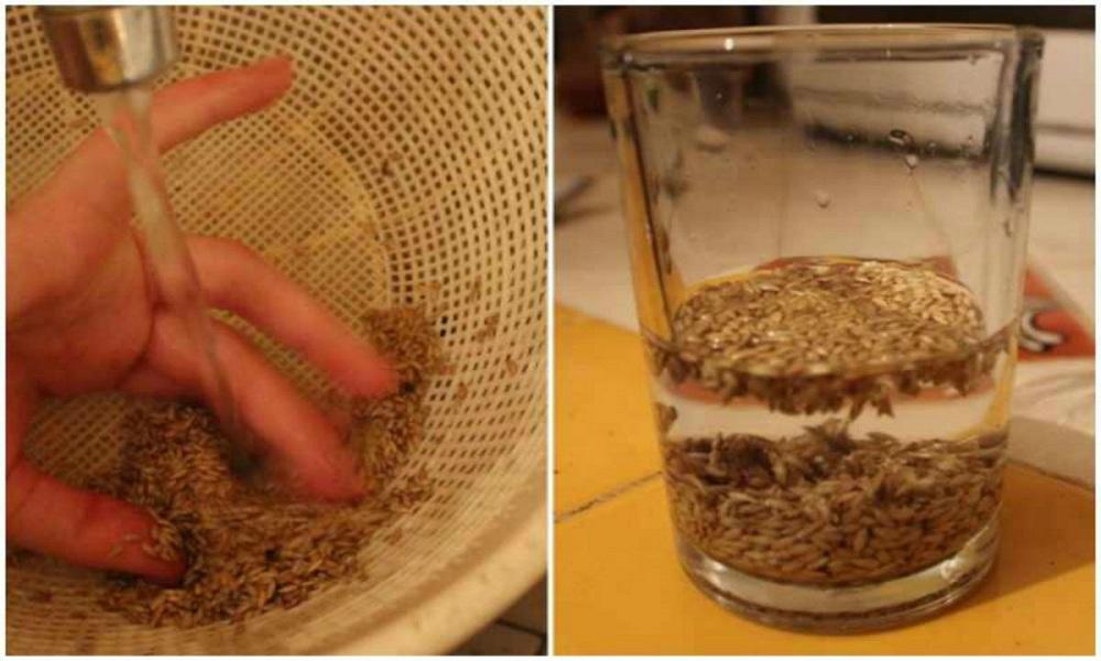 Cette graine traite l'hypertension et la gastrite, nettoie..