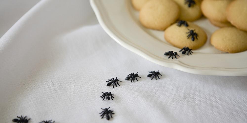r pulsif naturel pour faire d guerpir les fourmis emb tantes. Black Bedroom Furniture Sets. Home Design Ideas