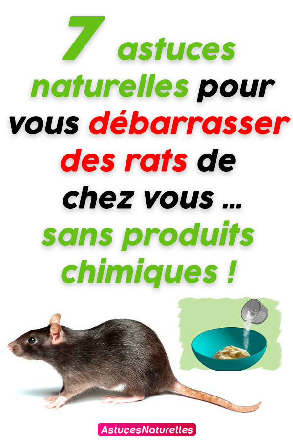7 astuces naturelles pour vous débarrasser des rats de chez vous … sans produits chimiques !
