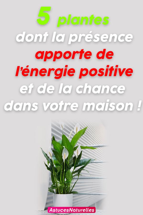 5 plantes dont la présence apporte de l'énergie positive et de la chance dans votre maison !
