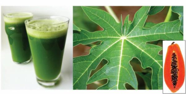 Les feuilles de papaye aident à guérir de certains problèmes de santé