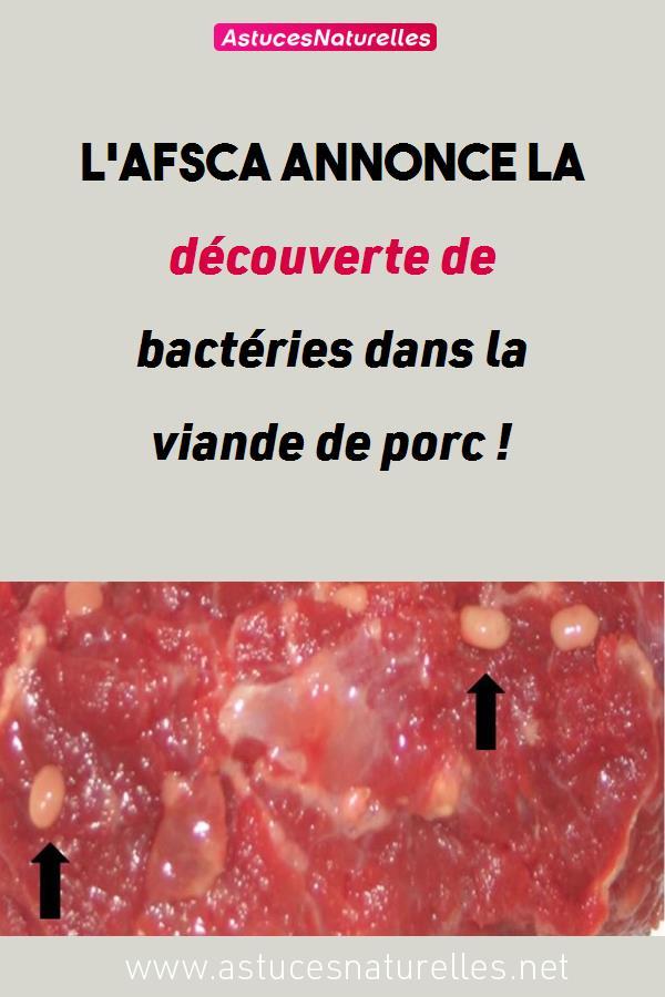 L'AFSCA annonce la découverte de bactéries dans la viande de porc !