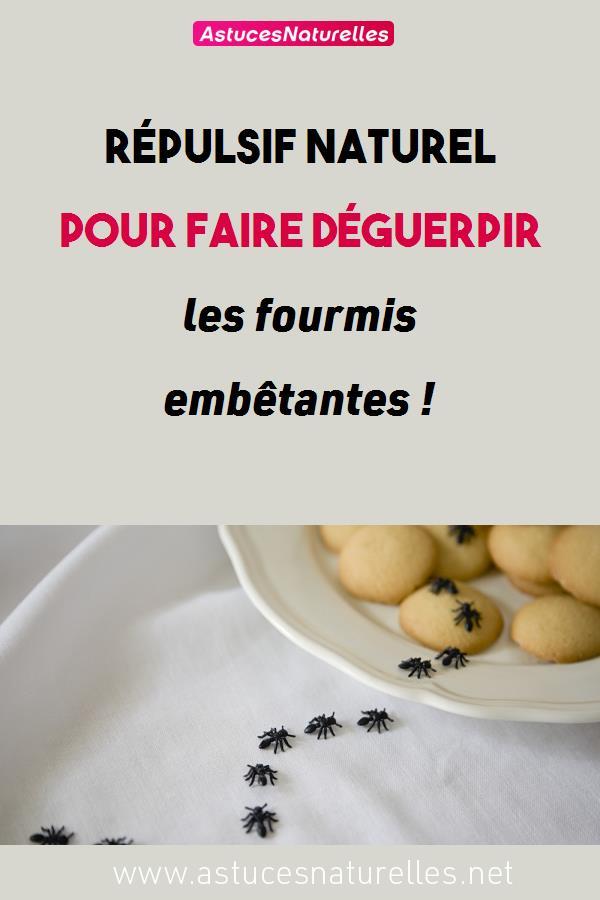 Répulsif naturel pour faire déguerpir les fourmis embêtantes !