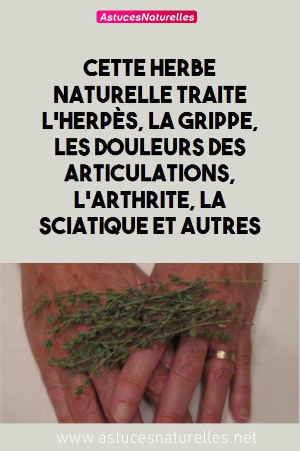 Cette herbe naturelle traite l'herpès, la grippe, les douleurs des articulations, l'arthrite, la sciatique et autres