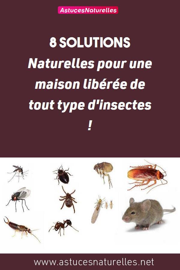 8 Solutions Naturelles pour une maison libérée de tout type d'insectes !