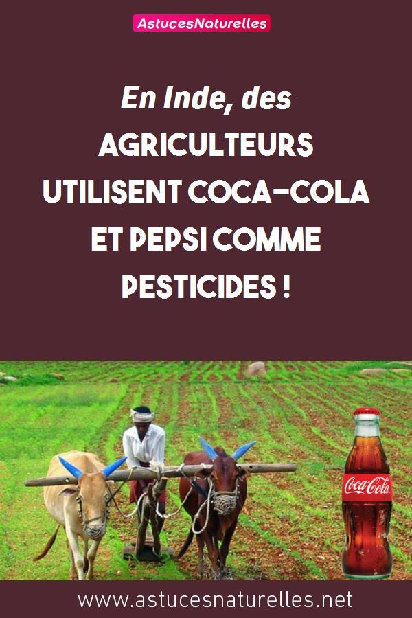 En Inde, des agriculteurs utilisent Coca-Cola et Pepsi comme pesticides !