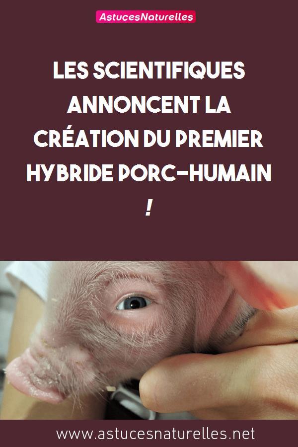 Les scientifiques annoncent la création du premier hybride porc-humain !