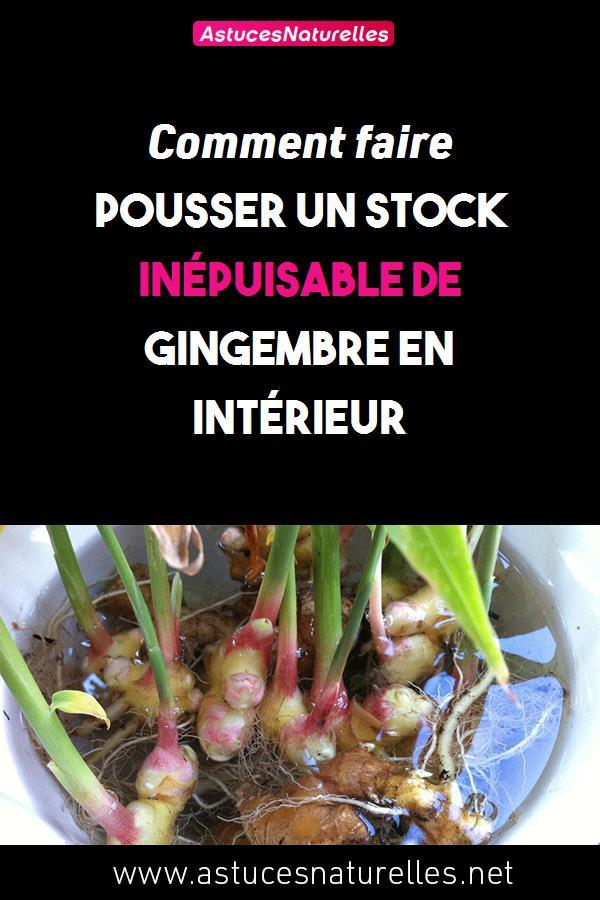 Comment faire pousser un stock inépuisable de gingembre en intérieur