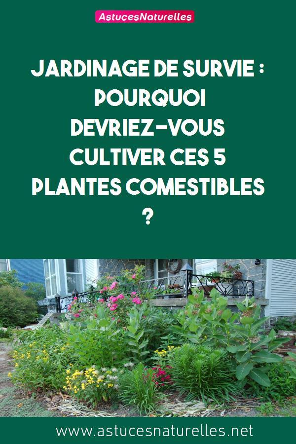 JARDINAGE DE SURVIE : Pourquoi devriez-vous cultiver ces 5 plantes comestibles ?