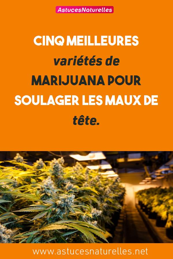 Cinq meilleures variétés de marijuana pour soulager les maux de tête.