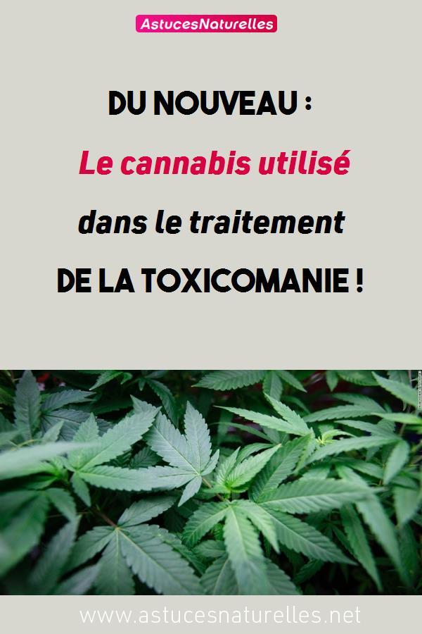 Du nouveau : Le cannabis utilisé dans le traitement de la toxicomanie !