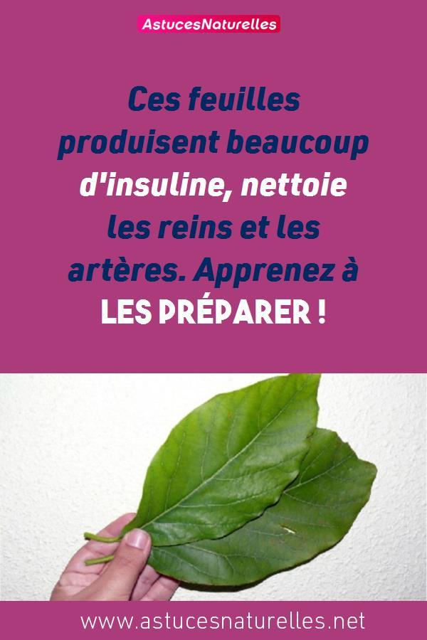 Ces feuilles produisent beaucoup d'insuline, nettoie les reins et les artères. Apprenez à les préparer !