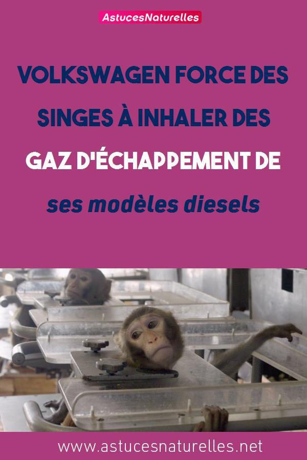 Volkswagen force des singes à inhaler des gaz d'échappement de ses modèles diesels