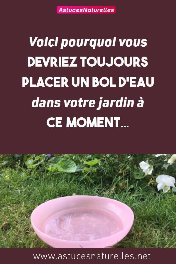 Voici pourquoi vous devriez toujours placer un bol d'eau dans votre jardin à ce moment…
