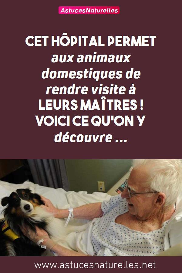 Cet hôpital permet aux animaux domestiques de rendre visite à leurs maîtres ! Voici ce qu'on y découvre …