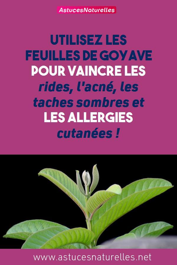 Utilisez les feuilles de goyave pour vaincre les rides, l'acné, les taches sombres et les allergies cutanées !
