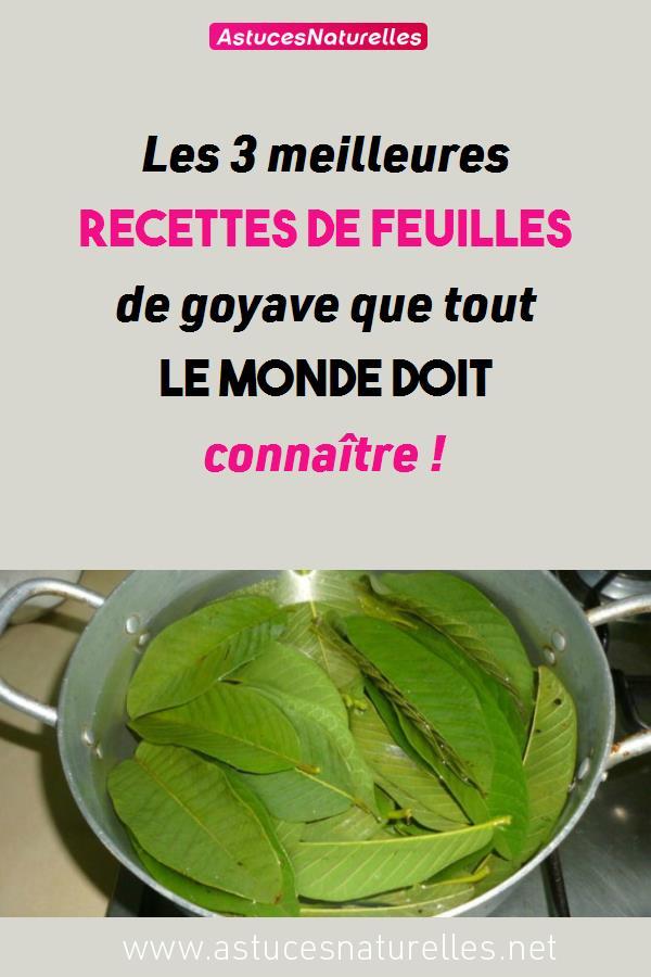 Les 3 meilleures recettes de feuilles de goyave que tout le monde doit connaître !