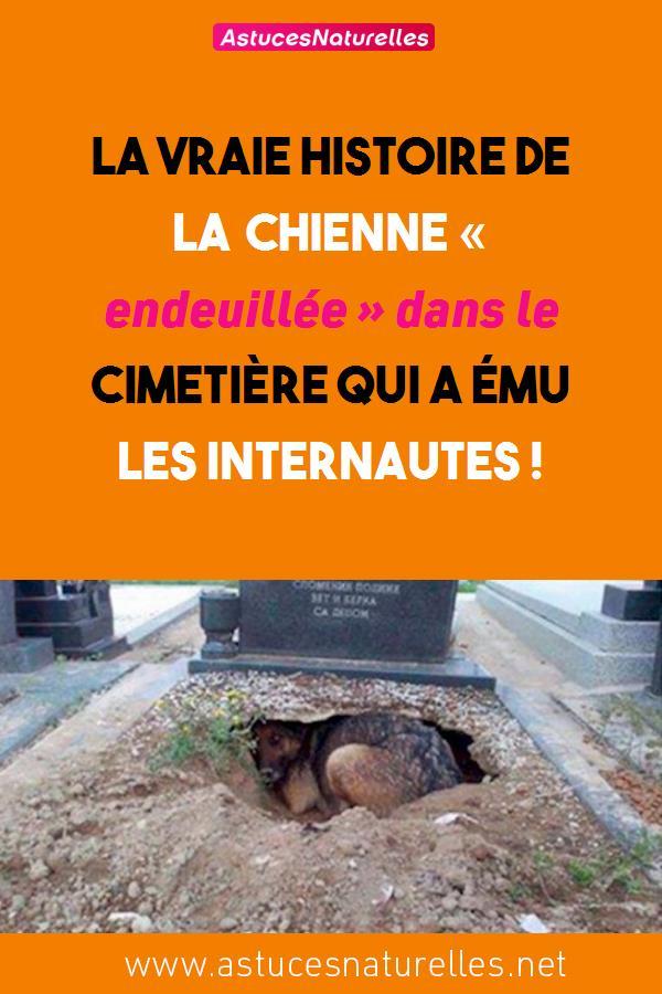 La vraie histoire de la chienne « endeuillée » dans le cimetière qui a ému les internautes !