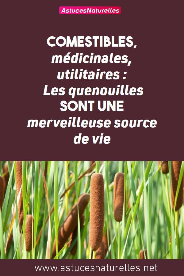 Comestibles, médicinales, utilitaires: Les quenouilles sont une merveilleuse source de vie
