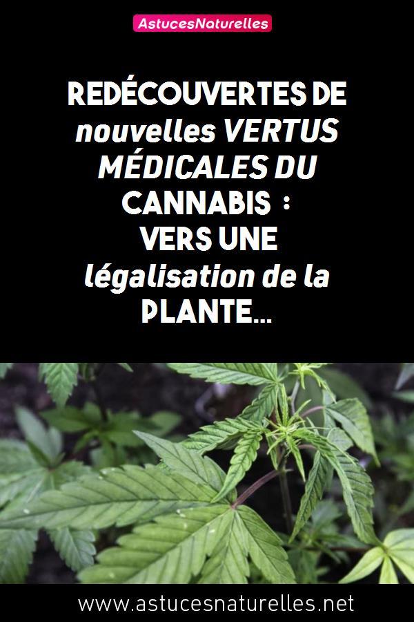 Redécouvertes de nouvelles VERTUS MÉDICALES DU CANNABIS : vers une légalisation de la plante…