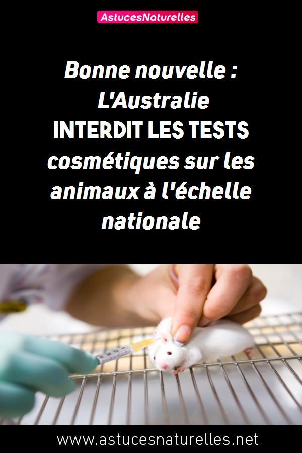 Bonne nouvelle : L'Australie interdit les tests cosmétiques sur les animaux à l'échelle nationale