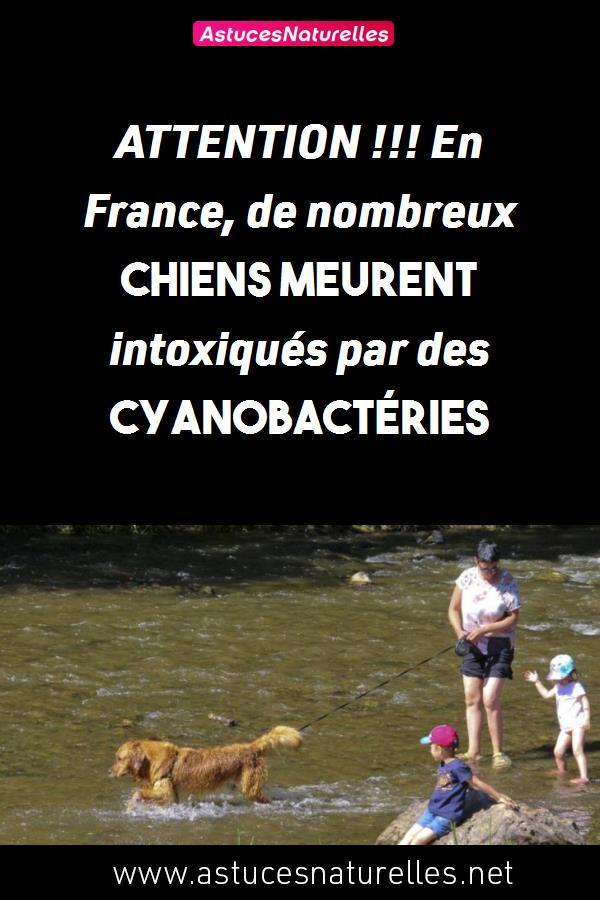 ATTENTION !!! En France, de nombreux chiens meurent intoxiqués par des cyanobactéries