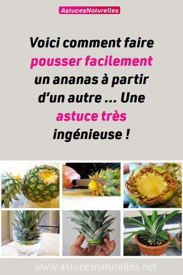 Voici comment faire pousser facilement un ananas à partir d'un autre … Une astuce très ingénieuse !