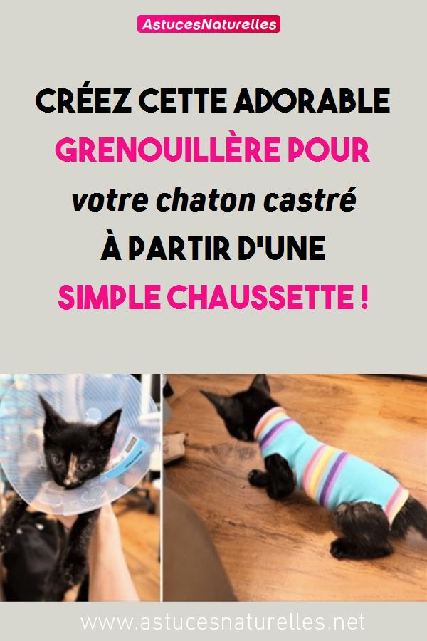 Créez cette adorable grenouillère pour votre chaton castré à partir d'une simple chaussette !