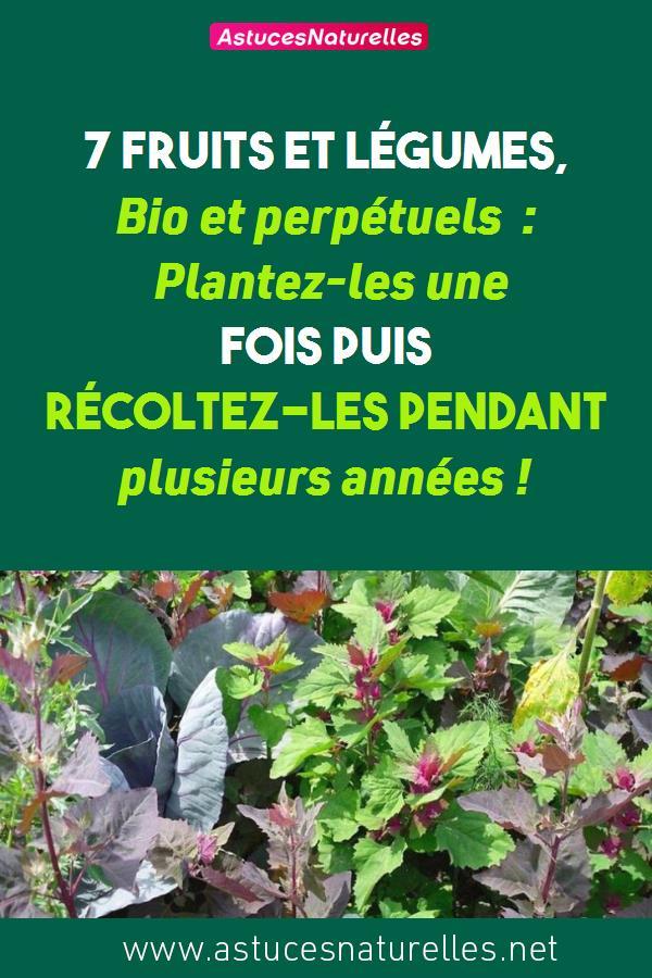 7 Fruits et légumes, Bio et perpétuels : Plantez-les une fois puis récoltez-les pendant plusieurs années !