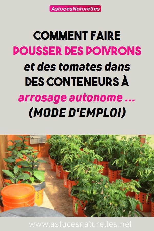 Comment faire pousser des poivrons et des tomates dans des conteneurs à arrosage autonome … (MODE D'EMPLOI)