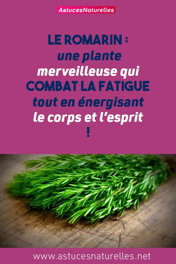 Le romarin : une plante merveilleuse qui combat la fatigue tout en énergisant le corps et l'esprit !