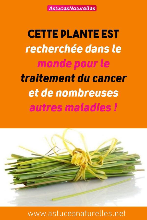 Cette plante est recherchée dans le monde pour le traitement du cancer et de nombreuses autres maladies !