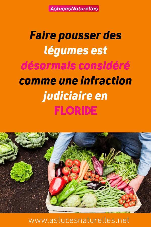 Faire pousser des légumes est désormais considéré comme une infraction judiciaire en Floride