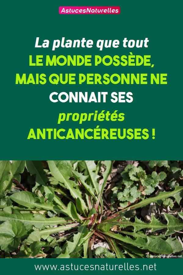 La plante que tout le monde possède, mais que personne ne connait ses propriétés anticancéreuses !