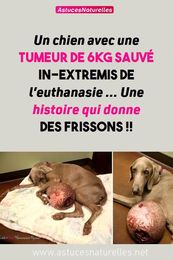 Un chien avec une tumeur de 6kg sauvé in-extremis de l'euthanasie … Une histoire qui donne des Frissons !!