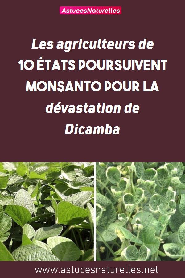 Les agriculteurs de 10 États poursuivent Monsanto pour la dévastation de Dicamba