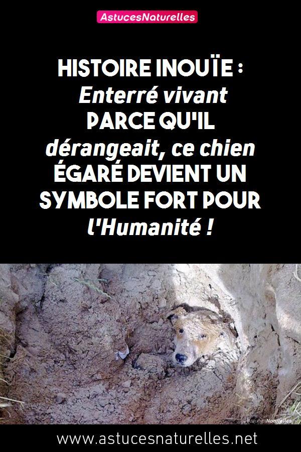 Histoire inouïe : Enterré vivant parce qu'il dérangeait, ce chien égaré devient un symbole fort pour l'Humanité !