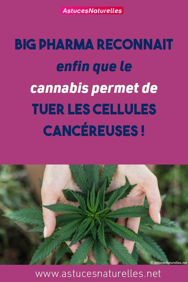 Big Pharma reconnait enfin que le cannabis permet de tuer les cellules cancéreuses !