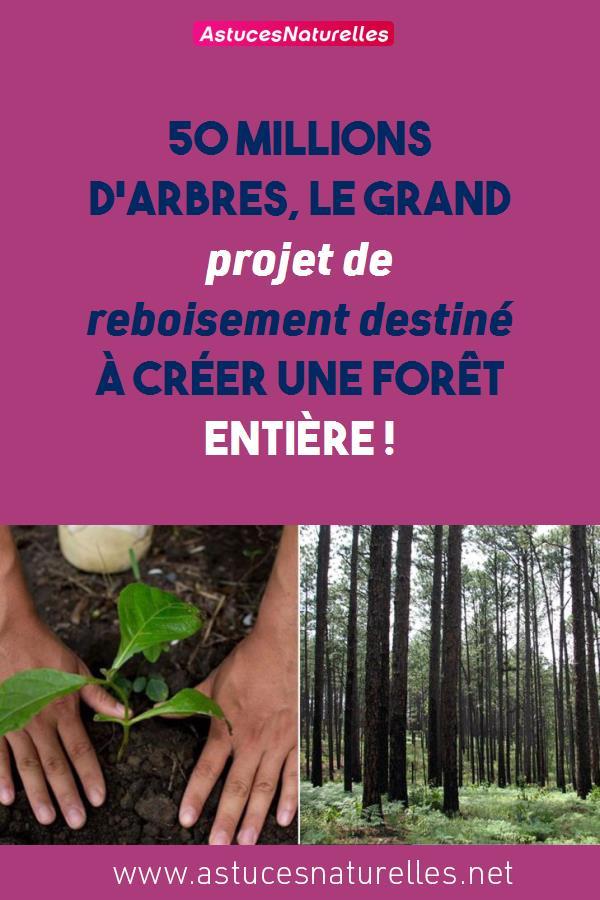 50 millions d'arbres, le grand projet de reboisement destiné à créer une forêt entière !