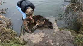 Femme trouve chien sans vie dans rivière – saute pour découvrir sa laisse attachée à un rocher