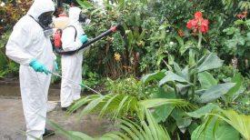 Dengue : 5000 cas en 10 mois, épidémie confirmée – Martinique la 1ère