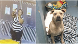 Femme fait un selfie, puis un doigt d'honneur en abandonnant son chien dans un refuge