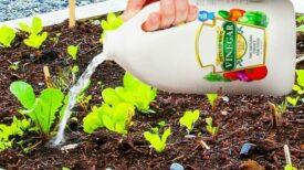 Vinaigre blanc au jardin: voici comment l'utiliser