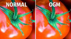 3 Façons simples de distinguer les aliments génétiquement modifiés des autres