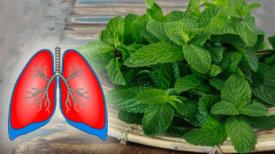 Ces 9 Plantes Nettoient Les Poumons Et Soulagent La Toux, La Bronchite Et L'asthme