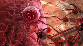 Candida albican et Cancer. Y'a t'il un lien ?