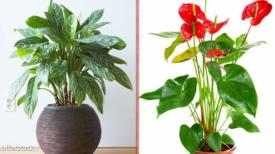 10 plantes d'intérieur à faible luminosité qui peuvent illuminer votre maison