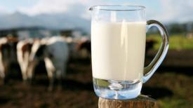 Savez-vous que le lait de vache met en péril votre santé ?